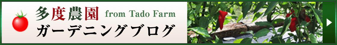 多度農園ブログ