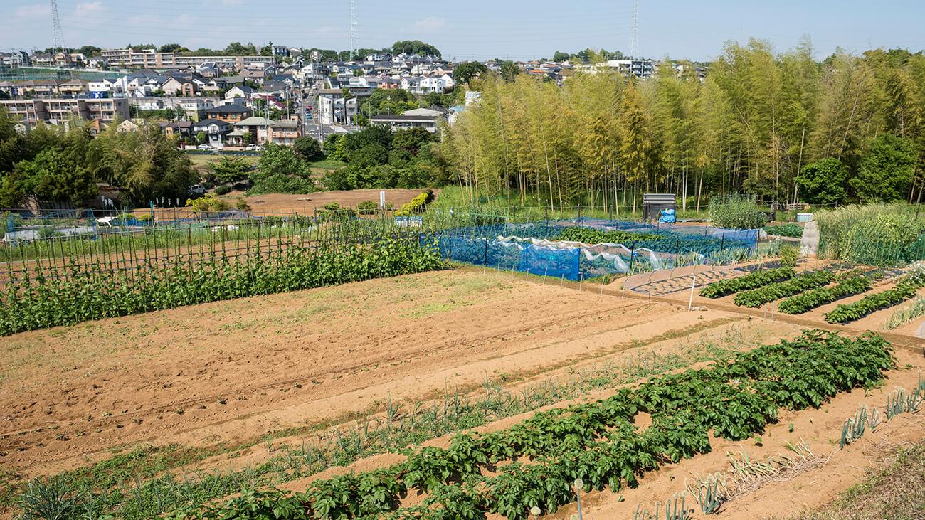 農地におすすめ土地活用法